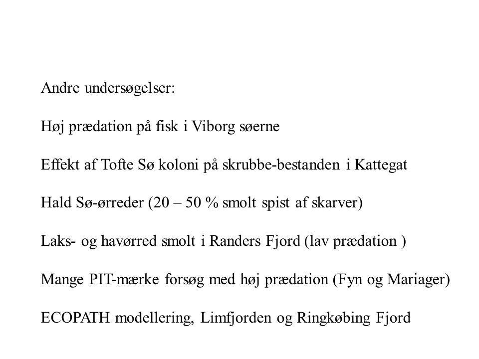 Andre undersøgelser: Høj prædation på fisk i Viborg søerne. Effekt af Tofte Sø koloni på skrubbe-bestanden i Kattegat.