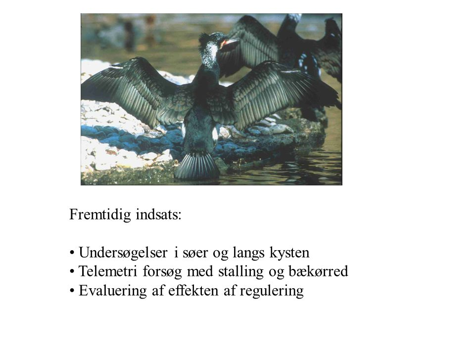 Fremtidig indsats: Undersøgelser i søer og langs kysten. Telemetri forsøg med stalling og bækørred.