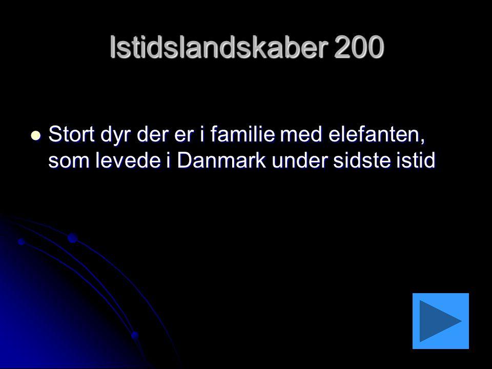 Istidslandskaber 200 Stort dyr der er i familie med elefanten, som levede i Danmark under sidste istid.