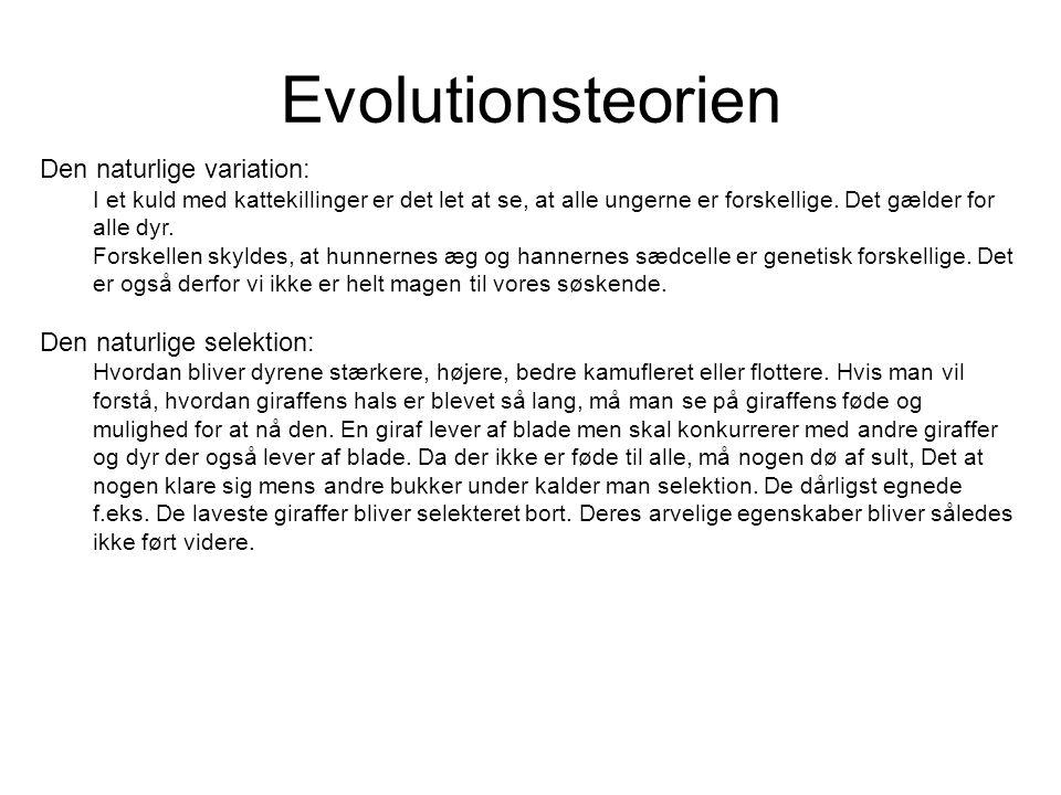 Evolutionsteorien Den naturlige variation: Den naturlige selektion:
