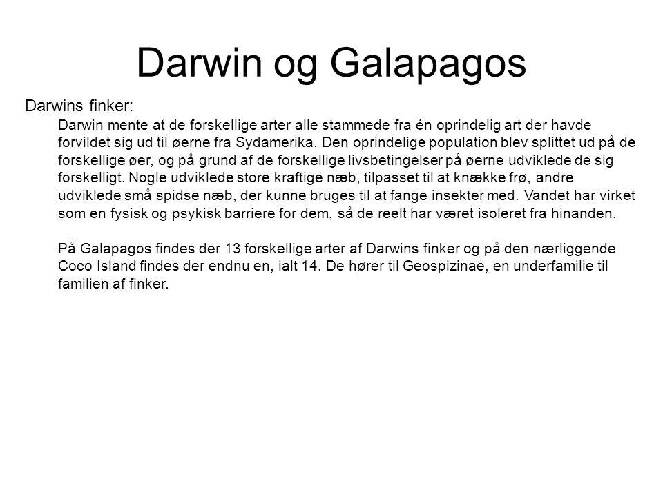 Darwin og Galapagos Darwins finker: