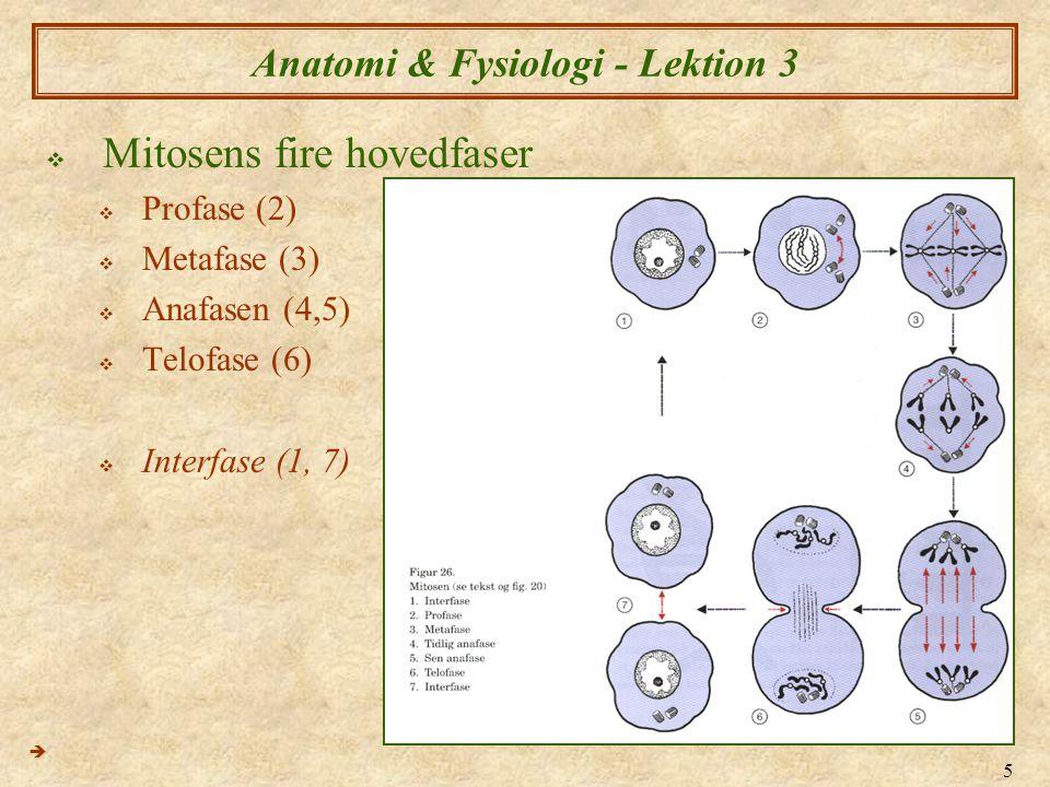 Anatomi & Fysiologi - Lektion 3