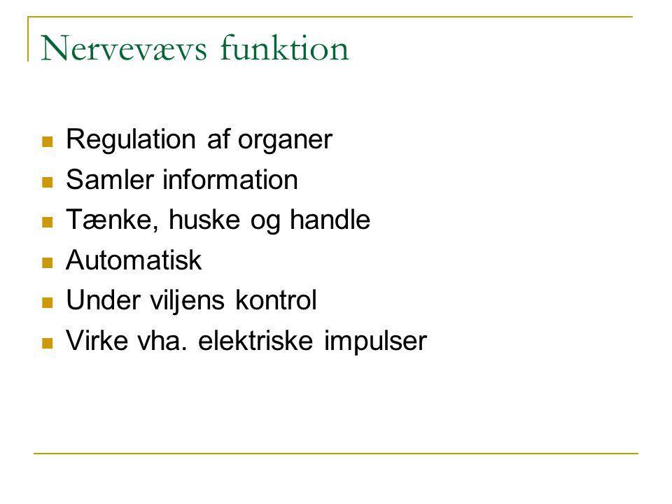 Nervevævs funktion Regulation af organer Samler information