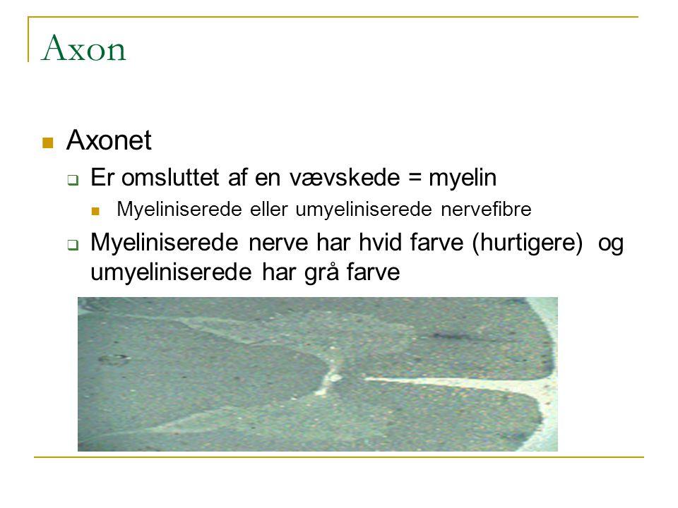Axon Axonet Er omsluttet af en vævskede = myelin