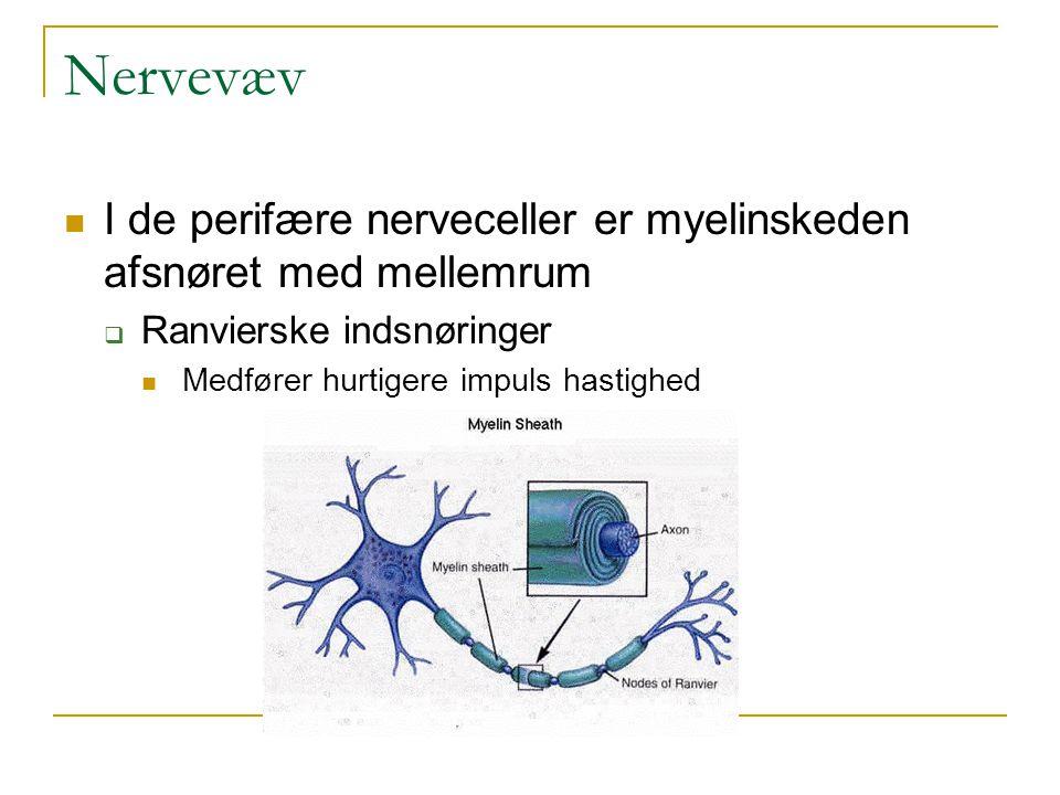 Nervevæv I de perifære nerveceller er myelinskeden afsnøret med mellemrum. Ranvierske indsnøringer.