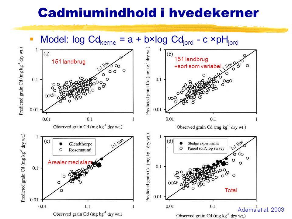 Cadmiumindhold i hvedekerner