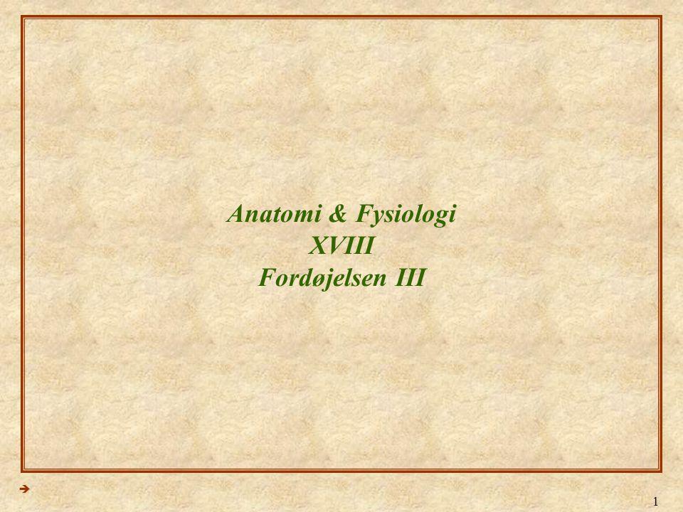 Anatomi & Fysiologi XVIII Fordøjelsen III