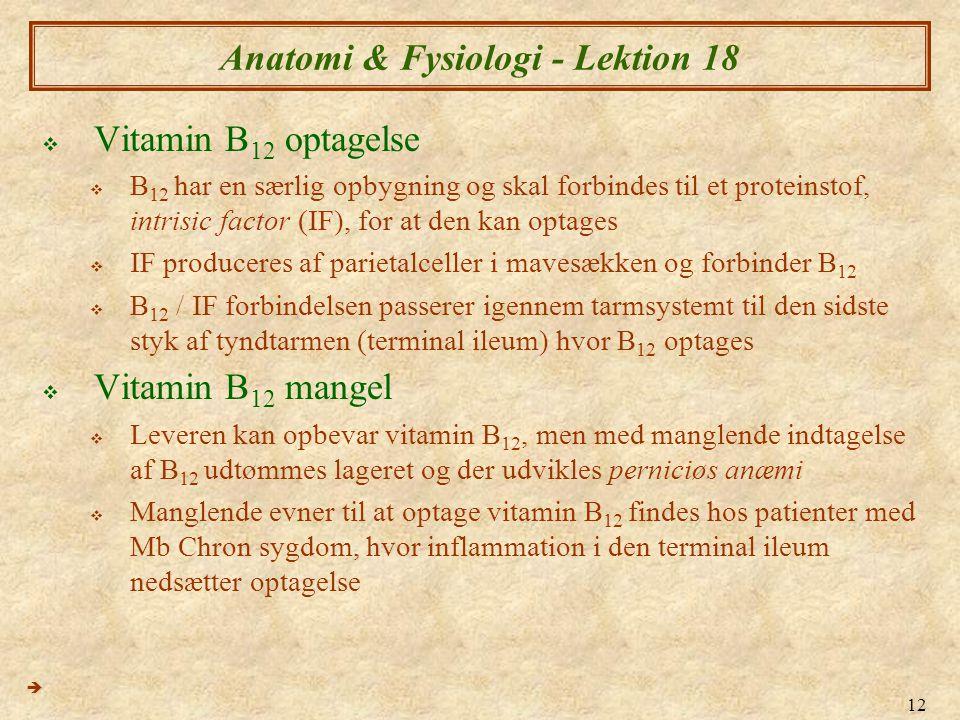 Anatomi & Fysiologi - Lektion 18
