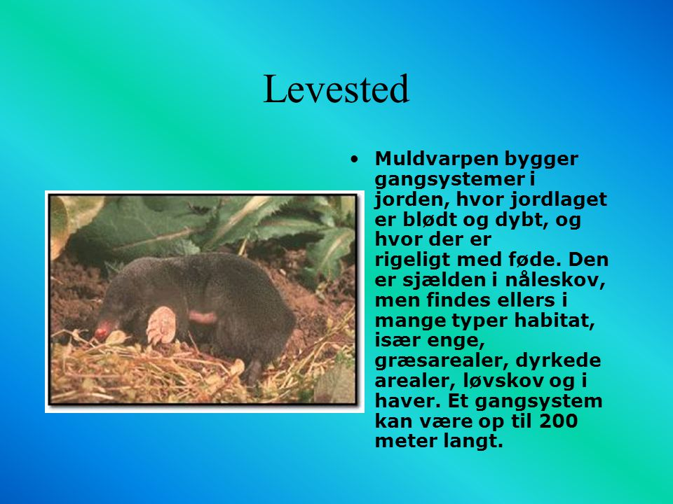 Levested