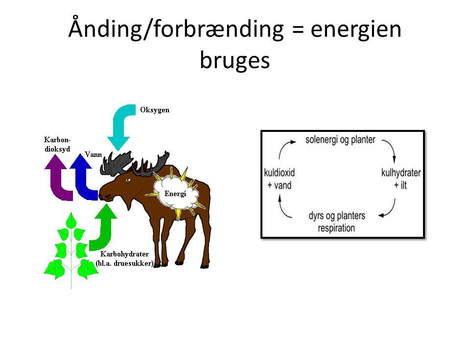 Ånding/forbrænding = energien bruges