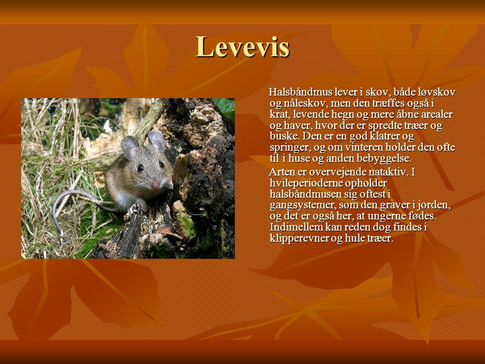 Levevis