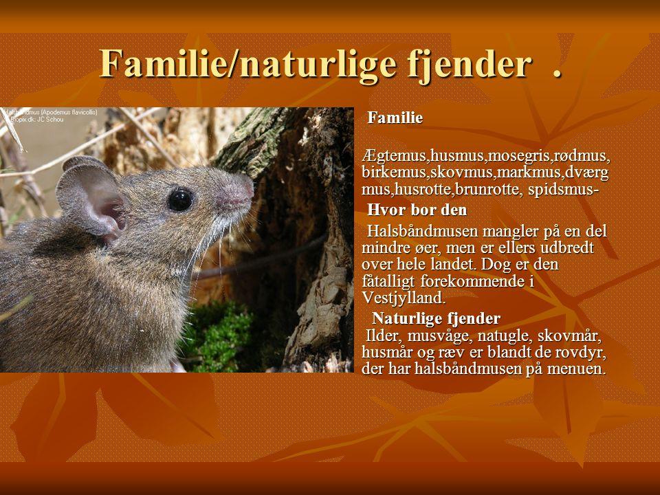 Familie/naturlige fjender .