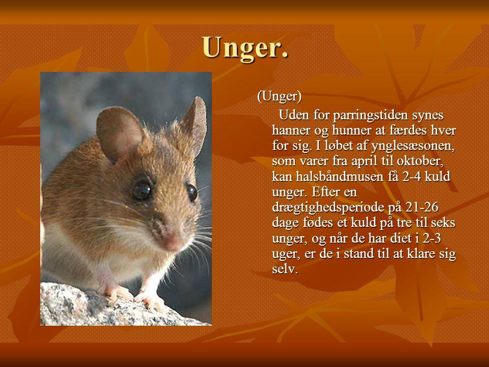 Unger. (Unger)