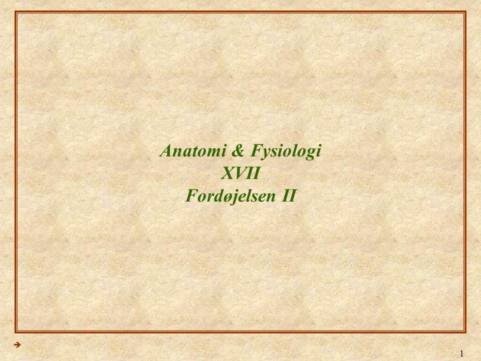 Anatomi & Fysiologi XVII Fordøjelsen II