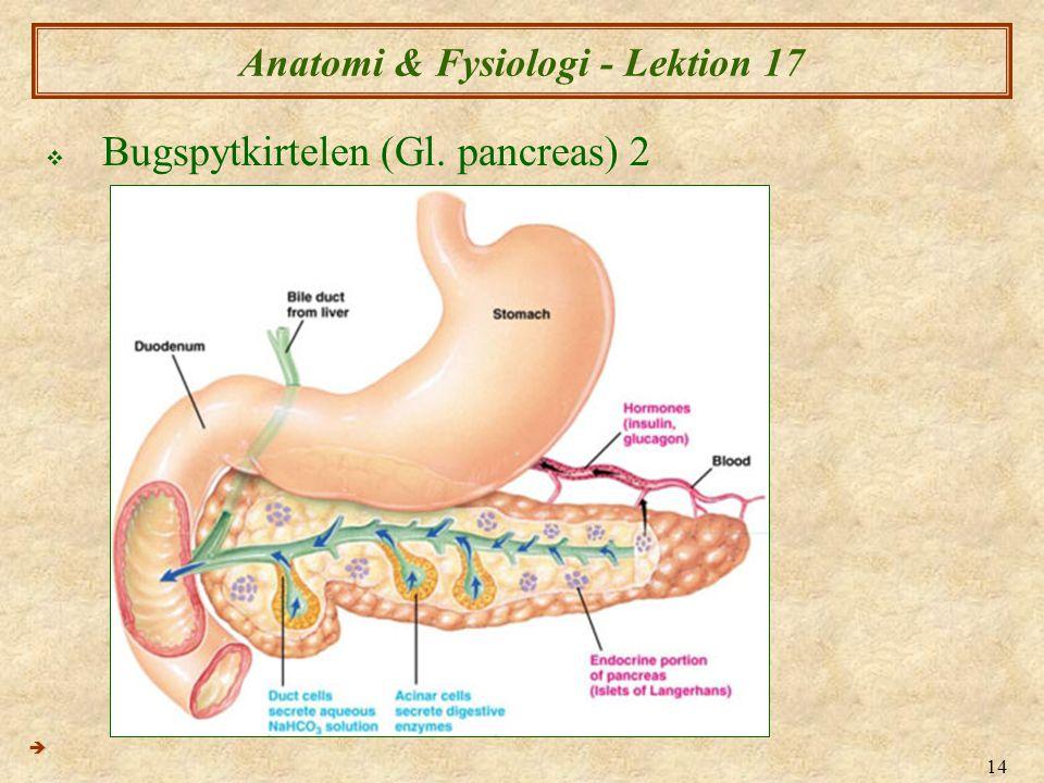 Anatomi & Fysiologi - Lektion 17