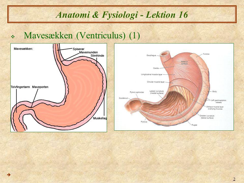 Anatomi & Fysiologi - Lektion 16