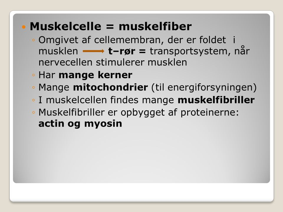 Muskelcelle = muskelfiber