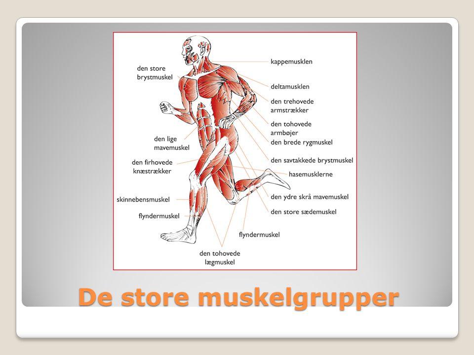 De store muskelgrupper