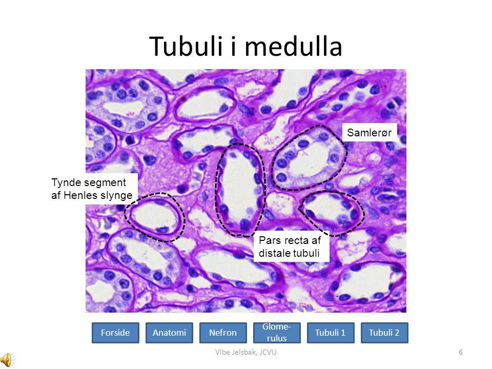 Tubuli i medulla Samlerør Tynde segment af Henles slynge Pars recta af