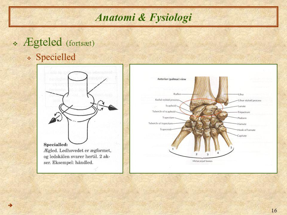Anatomi & Fysiologi Ægteled (fortsæt) Specielled 