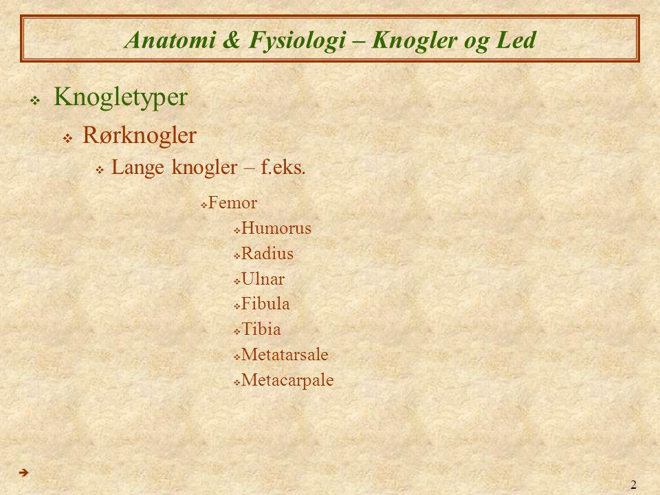 Anatomi & Fysiologi – Knogler og Led