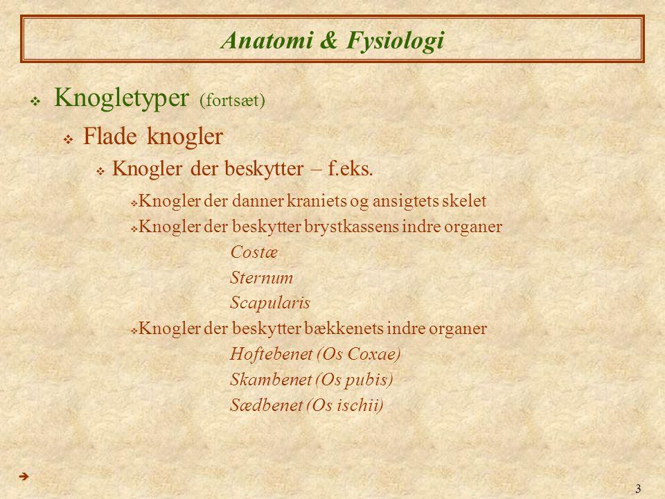 Knogletyper (fortsæt)