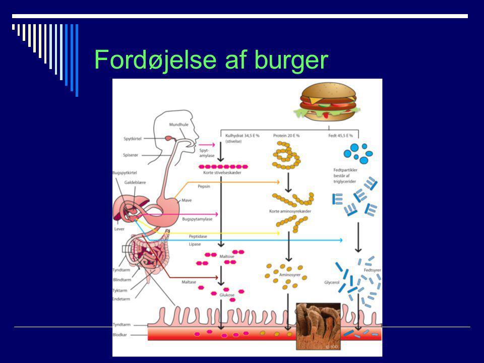 Fordøjelse af burger