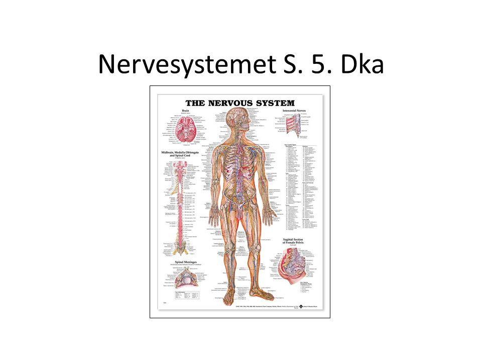 Nervesystemet S. 5. Dka