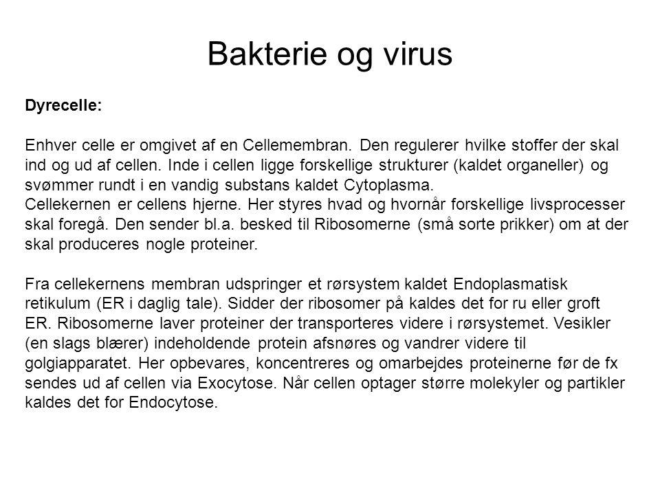 Bakterie og virus Dyrecelle: