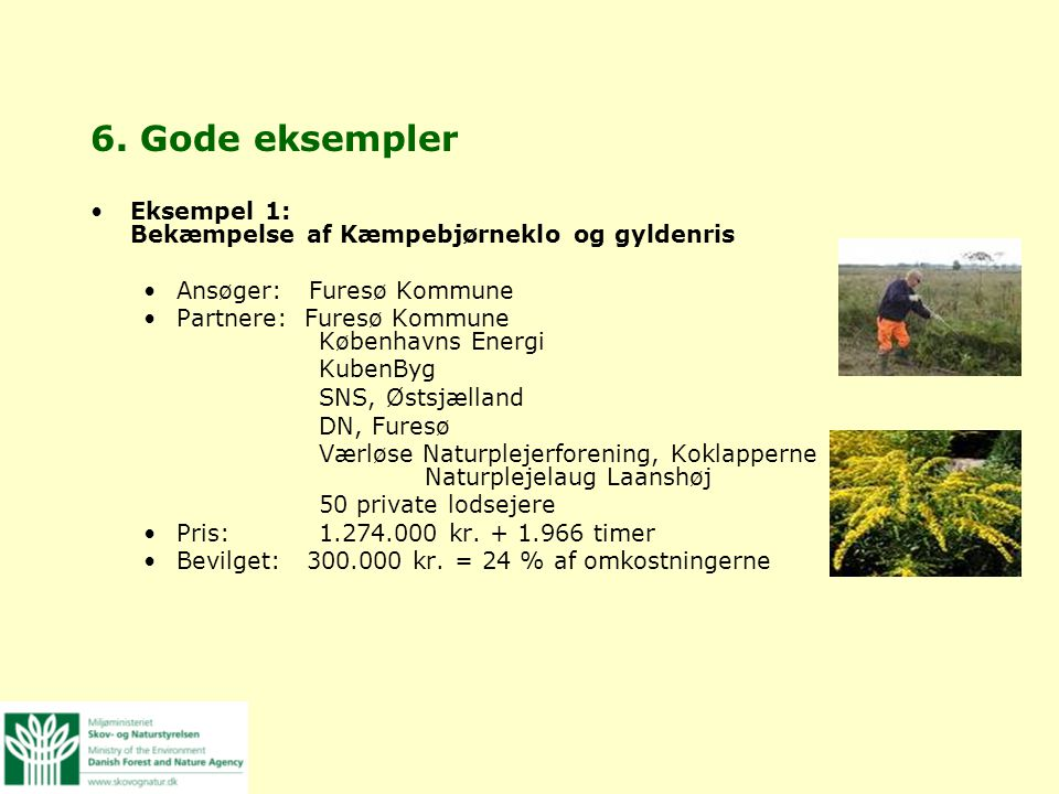 6. Gode eksempler Eksempel 1: Bekæmpelse af Kæmpebjørneklo og gyldenris. Ansøger: Furesø Kommune.