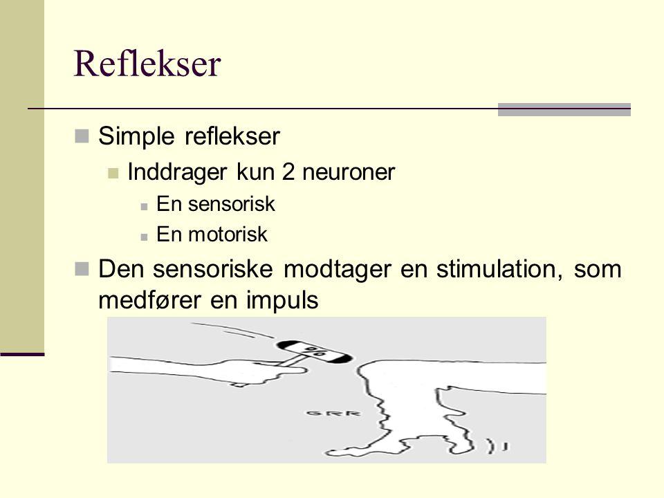 Reflekser Simple reflekser