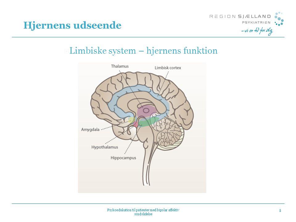 Hjernens udseende Limbiske system – hjernens funktion
