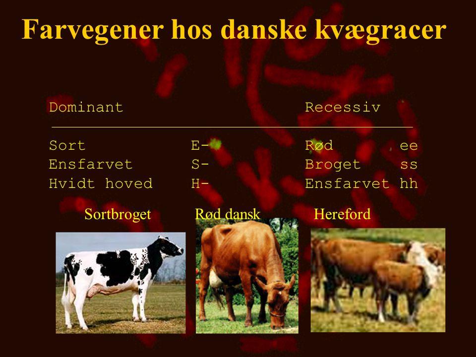 Farvegener hos danske kvægracer