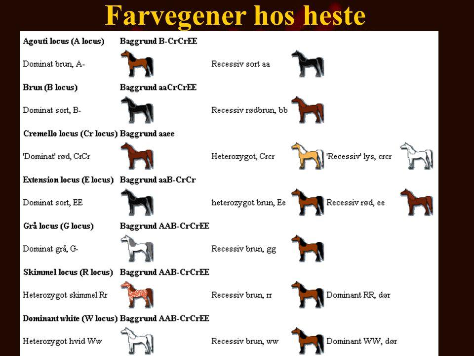 Farvegener hos heste De vigtigste farvegener hos hest med angivelse af baggrunds farvegener er følgende: