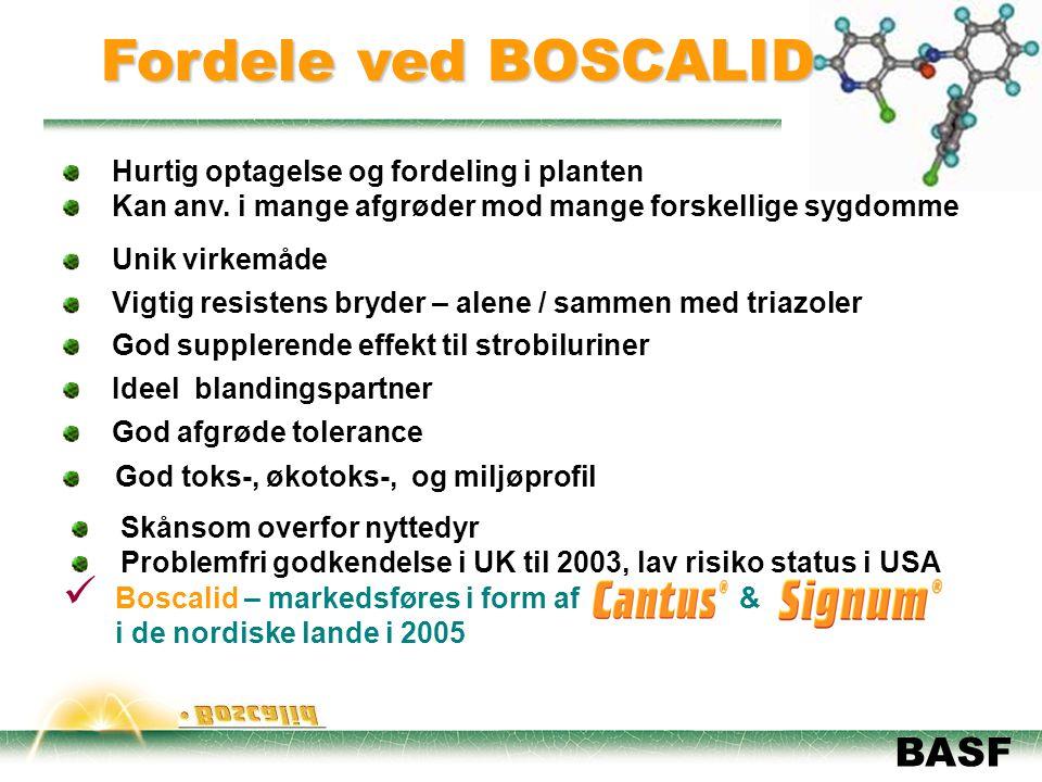 Fordele ved BOSCALID Hurtig optagelse og fordeling i planten