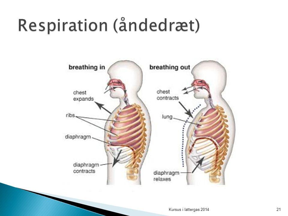 Respiration (åndedræt)