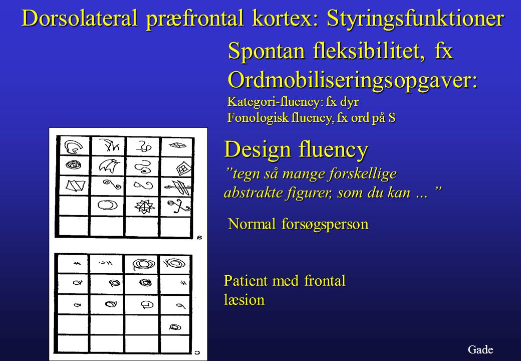 Dorsolateral præfrontal kortex: Styringsfunktioner