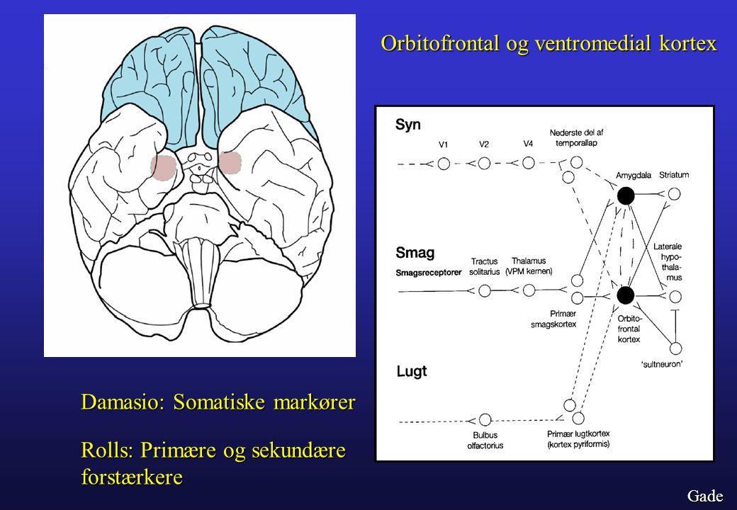 Orbitofrontal og ventromedial kortex