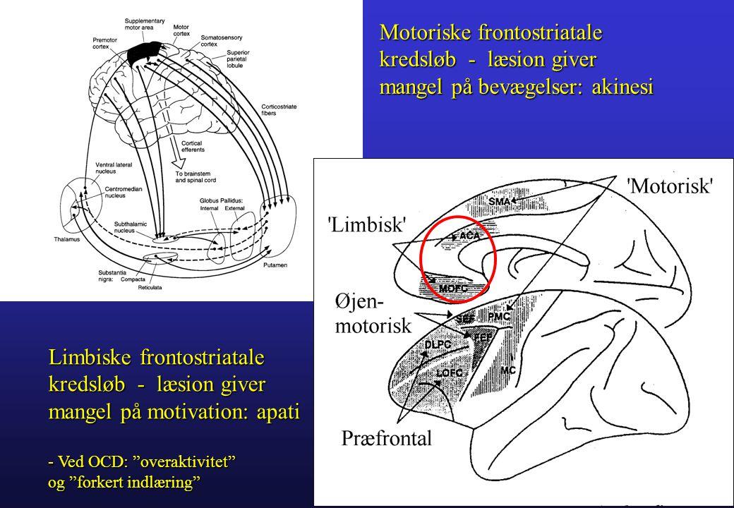 Motoriske frontostriatale kredsløb - læsion giver mangel på bevægelser: akinesi