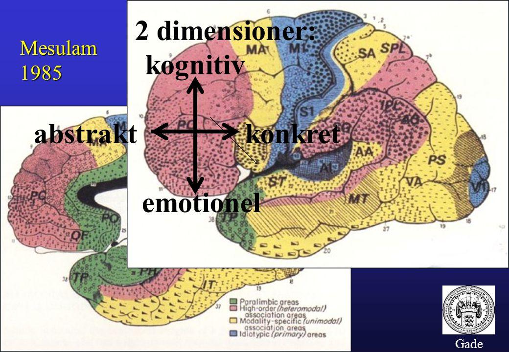2 dimensioner: kognitiv abstrakt konkret emotionel Mesulam 1985 Gade