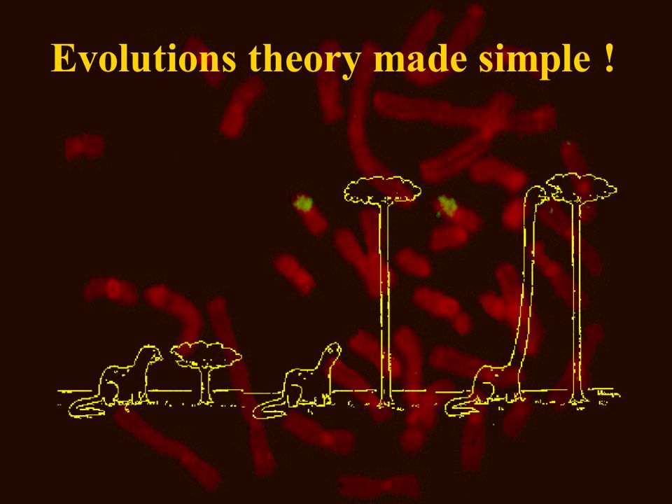 Evolutions theory made simple !