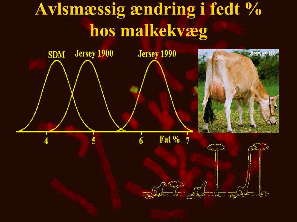 Avlsmæssig ændring i fedt % hos malkekvæg