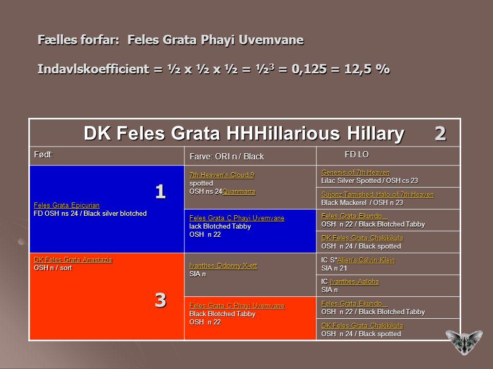 2 1 3 DK Feles Grata HHHillarious Hillary
