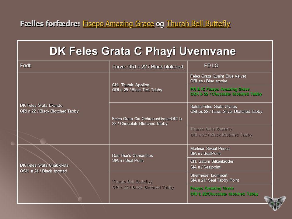 DK Feles Grata C Phayi Uvemvane