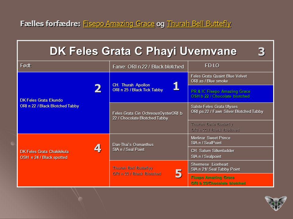 3 1 2 4 5 DK Feles Grata C Phayi Uvemvane