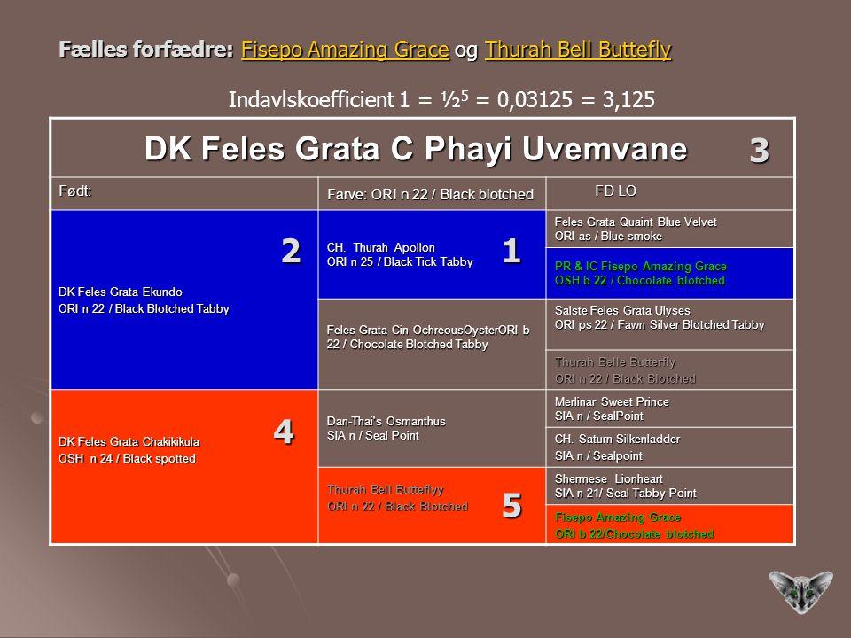 3 2 1 4 5 DK Feles Grata C Phayi Uvemvane