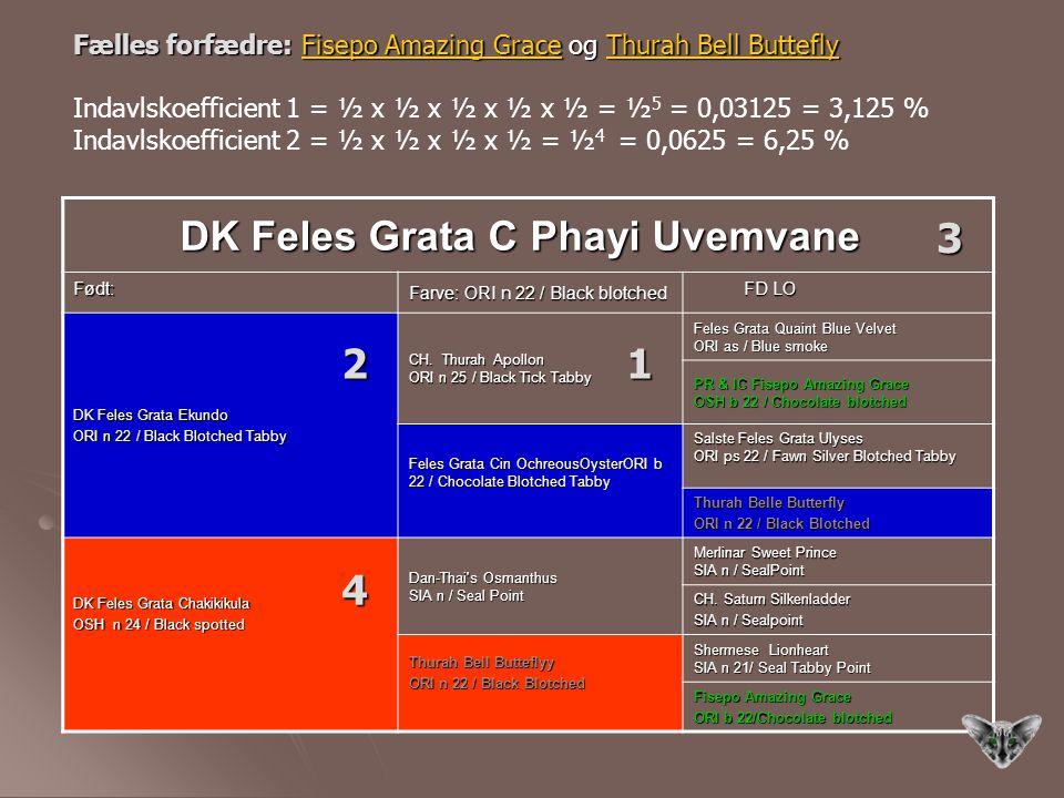 3 2 1 4 DK Feles Grata C Phayi Uvemvane