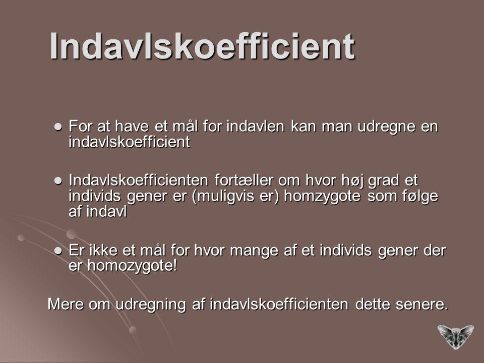 Indavlskoefficient For at have et mål for indavlen kan man udregne en indavlskoefficient.