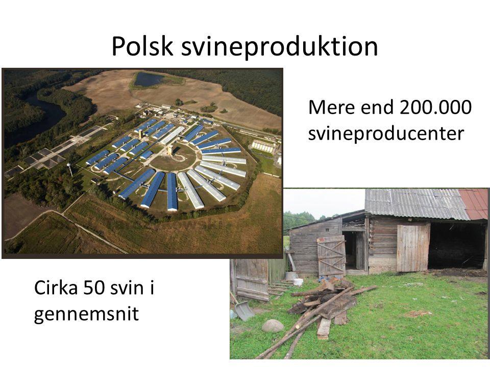 Polsk svineproduktion