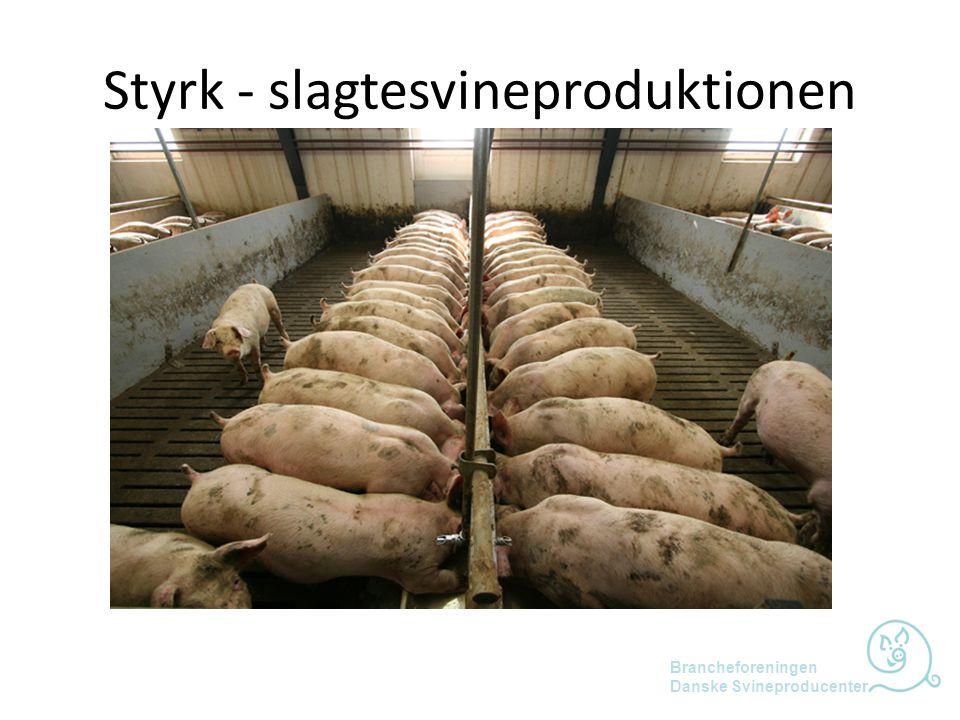 Styrk - slagtesvineproduktionen